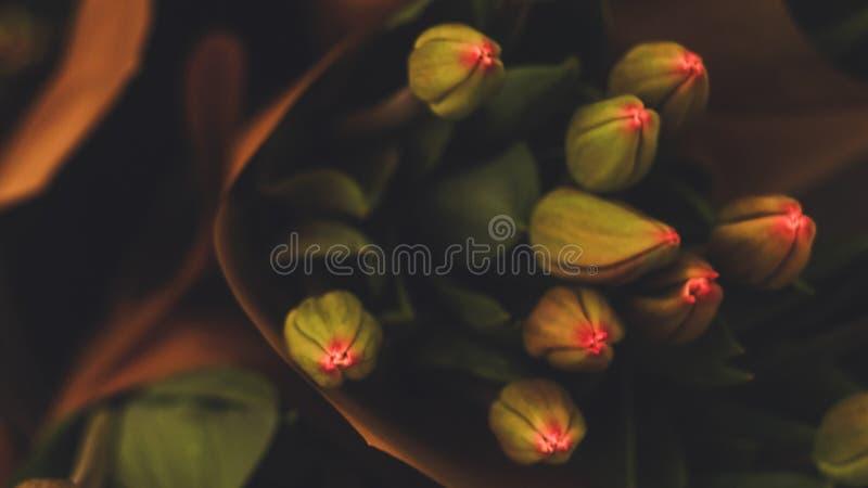 Tulpen met diepe sterke kleuren stock afbeelding