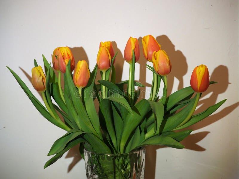 Tulpen met Schaduwen tegen een Witte Muur stock foto's