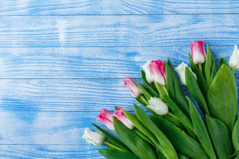 Tulpen mit Makronen auf blauem hölzernem Hintergrund stockfotos