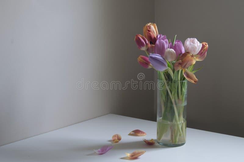Tulpen nach der Partei lizenzfreie stockfotografie