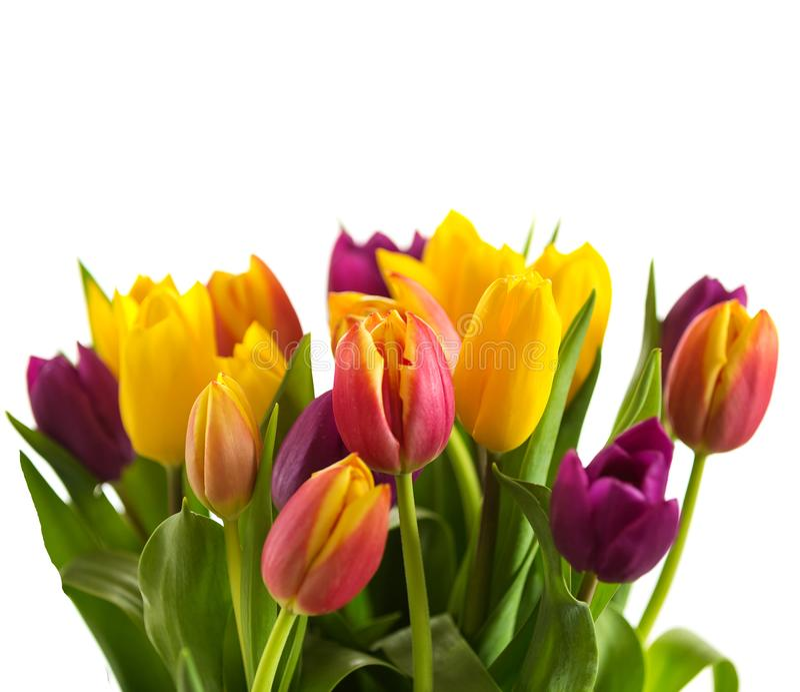 Tulpen op een witte achtergrond, de Lentebloemen stock foto