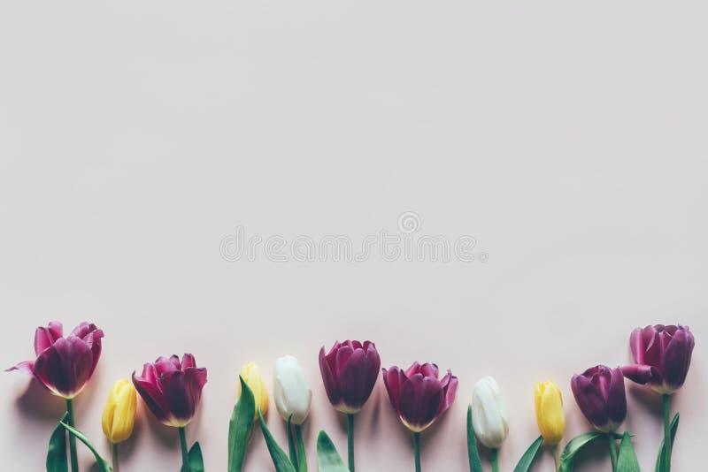 Tulpen op pastelkleurachtergrond stock foto