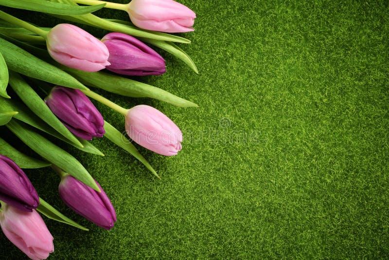 Tulpen op weide royalty-vrije stock foto