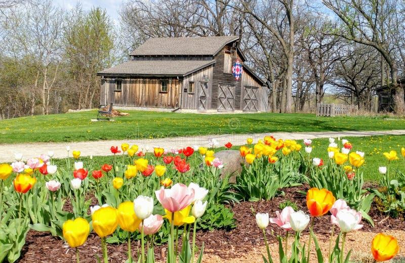 Tulpen, patriotische Steppdecken-Scheune, Beckman-Mühle, Beloit, WI lizenzfreies stockbild