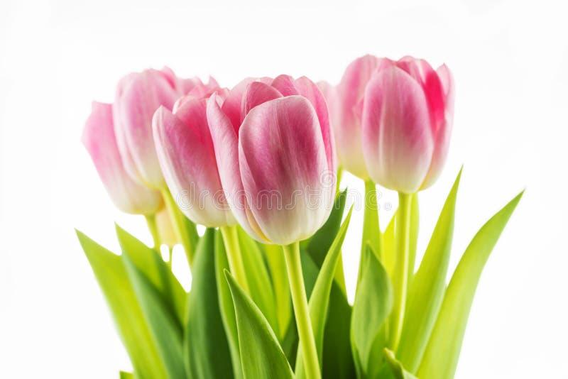 Tulpen Rosa Blumen Lokalisiert Auf Einem Weißen Hintergrund ...
