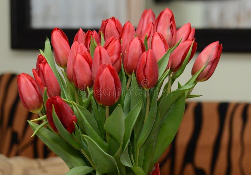 Tulpen rot stockbilder