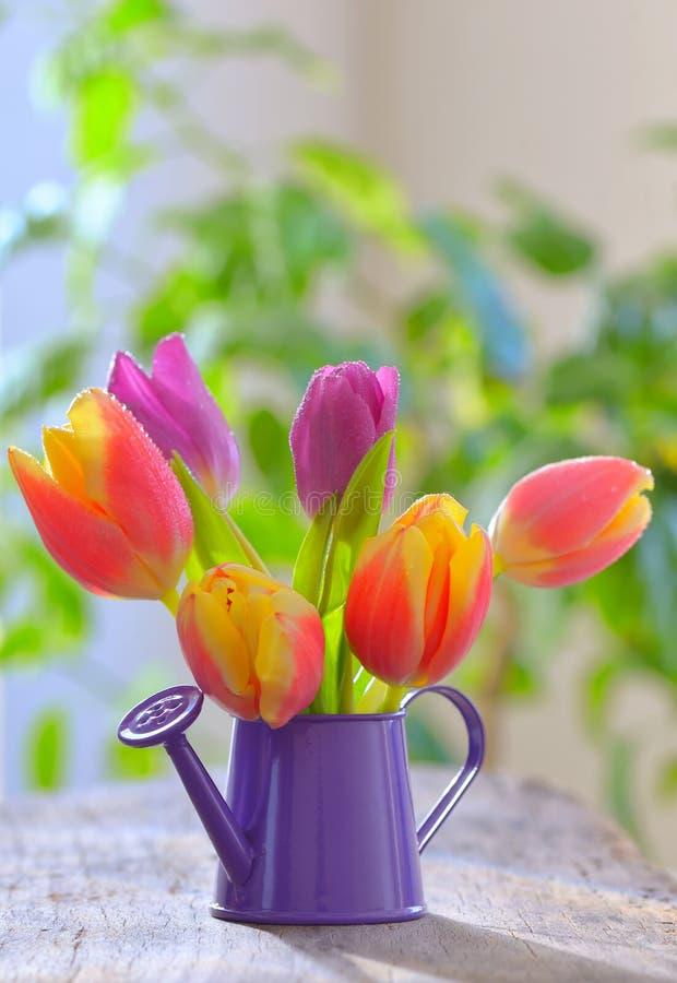 Tulpen in sproeiertuin stock foto