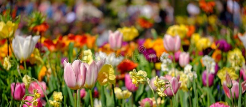 Tulpen und andere bunte Blumen an Keukenhof-Gärten, Lisse, Südholland Fotografiert in hohen Dynamikwerten HDRs stockfotografie