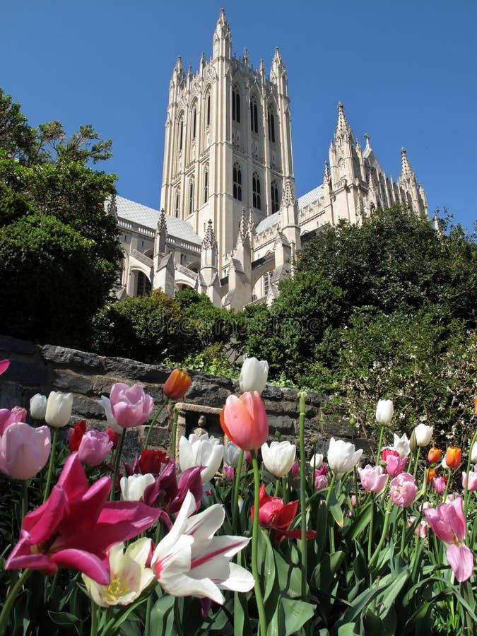 Tulpen und nationale Kathedrale stockfotos