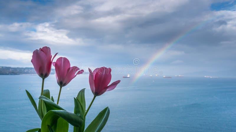 Tulpen und Regenbogen auf dem Ozean lizenzfreies stockbild