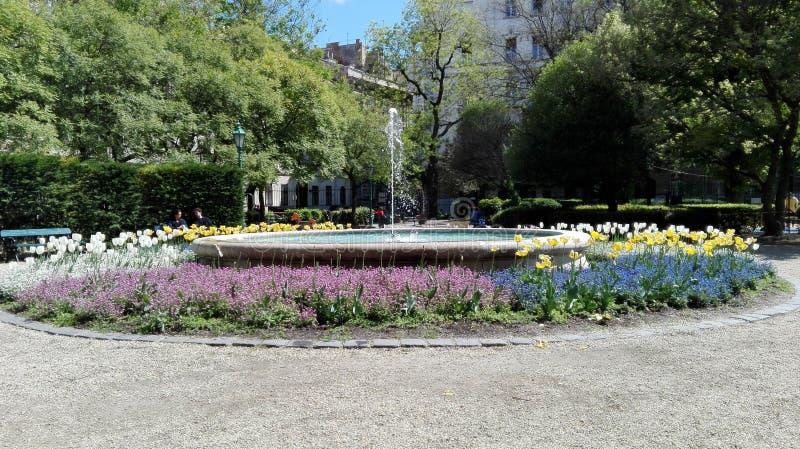 Tulpen und Winde auf einem weißen Hintergrund stockfotos