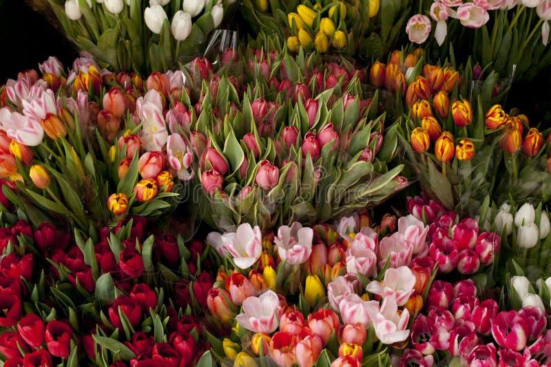 Tulpen van vele kleuren voor verkoop royalty-vrije stock afbeeldingen