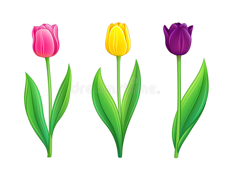 Tulpen - vectorillustratie eps10 stock illustratie