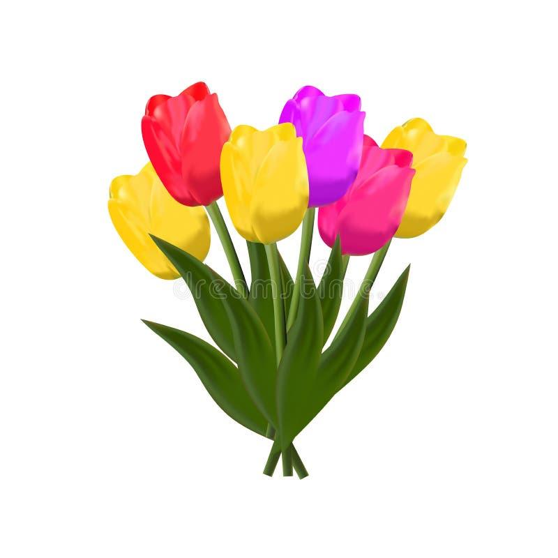 Tulpen Vektor vektor abbildung