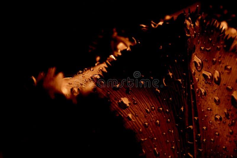 Tulpenahaufnahme, im Regen lizenzfreies stockfoto