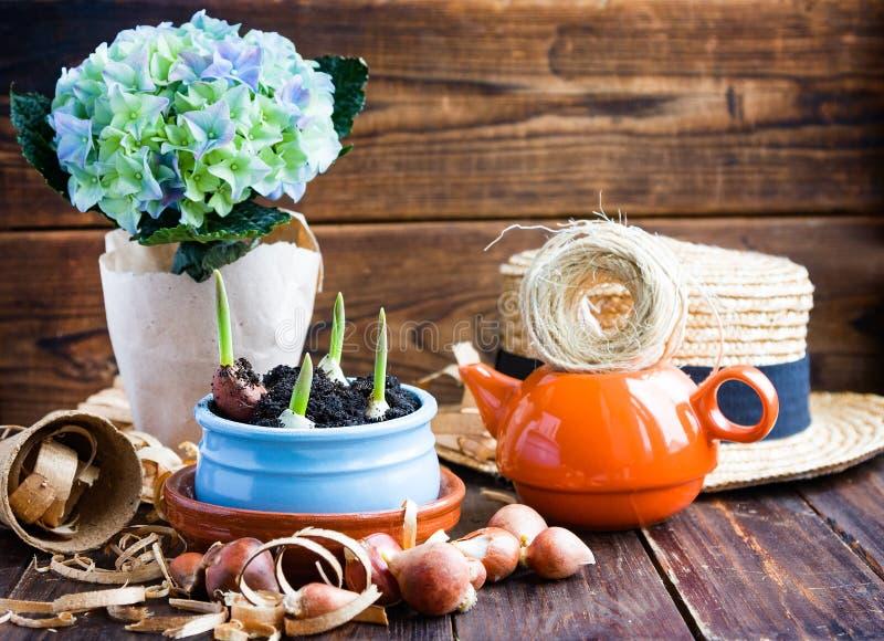 Tulpenbirnen, eingemachte Sprösslinge, Weidenhut, Hyazinthe und Werkzeuge stockfotografie