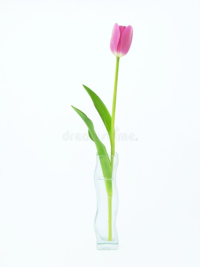 Tulpenbloem in vaas stock afbeelding