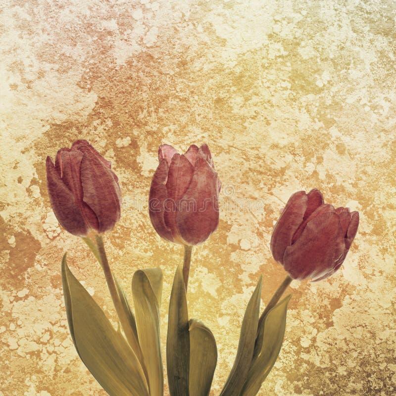 Tulpenbloemen royalty-vrije illustratie