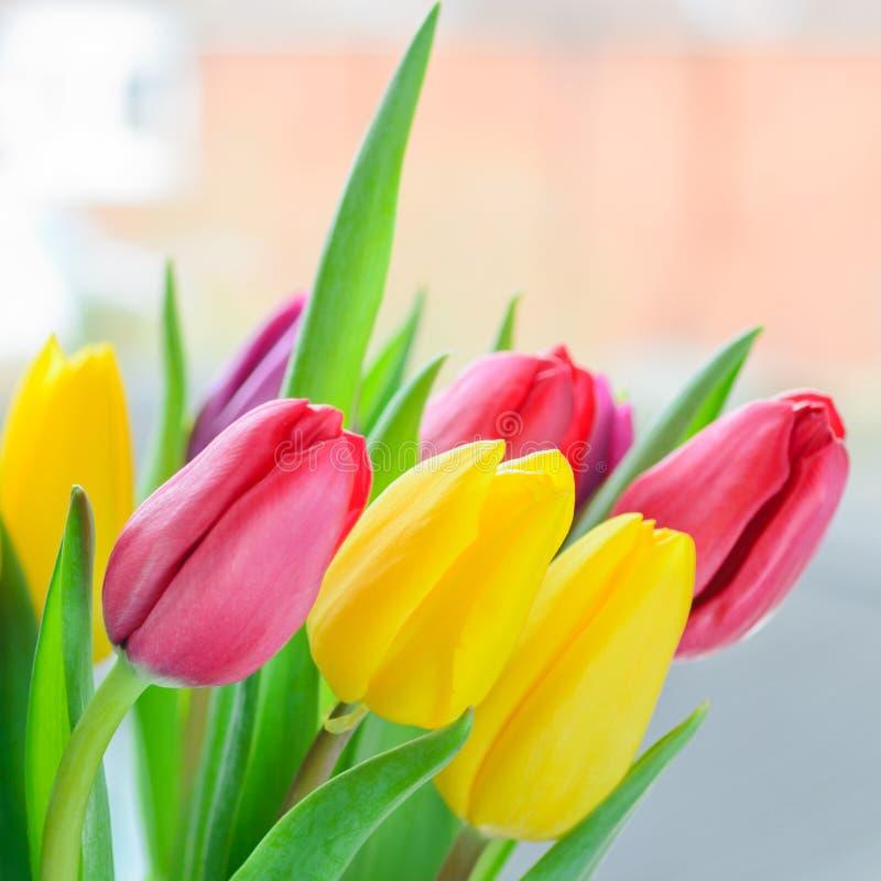 Tulpenbloemen stock afbeelding