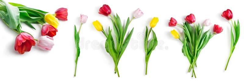 Tulpenbloemen geplaatst die op wit met inbegrepen knippen van weg worden geïsoleerd stock afbeeldingen