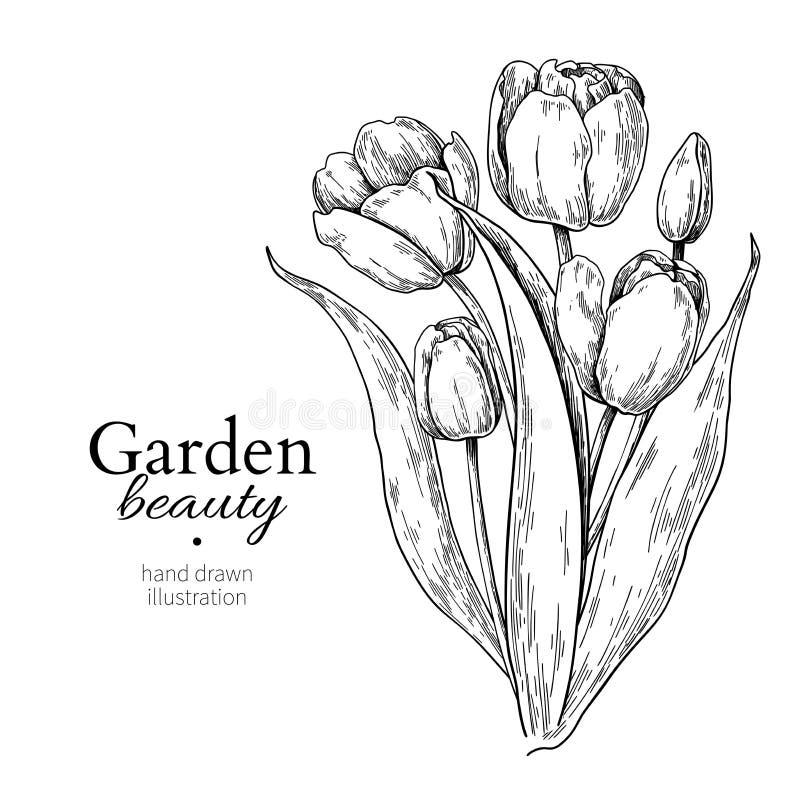 Tulpenblume und Blattblumenstraußzeichnung Vector Hand gezeichnete gravierte Blumenillustration stock abbildung