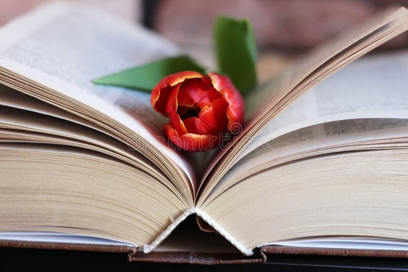 Tulpenblume und Weinlesebuch stockfoto