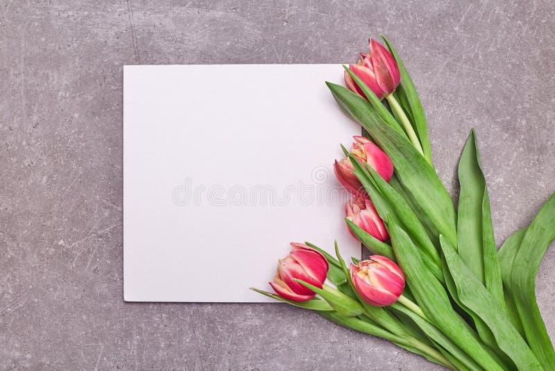 Tulpenblumen auf grauem Hintergrund Kreative Zusammensetzungskarte der Blume mit Tulpe Flache Lage, Frühlingsblumenschablone lizenzfreies stockbild
