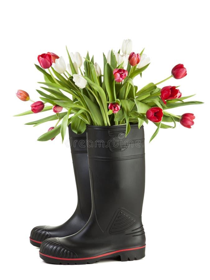 Tulpenblumenstrauß in den Stiefeln des schwarzen Gummis lokalisiert stockfoto