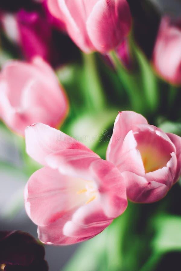 Tulpenblumenstrauß - Hochzeit, Feiertag und Blumengarten angeredetes Konzept stockfotografie