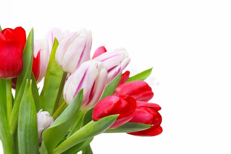 Tulpenboeket, op wit wordt geïsoleerd dat stock afbeelding