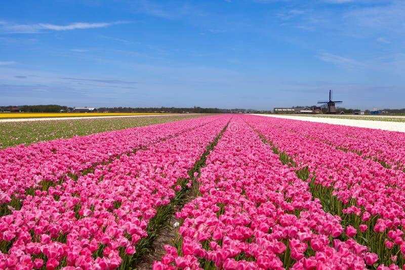 Tulpenfelder mit einer Windmühle stockbilder