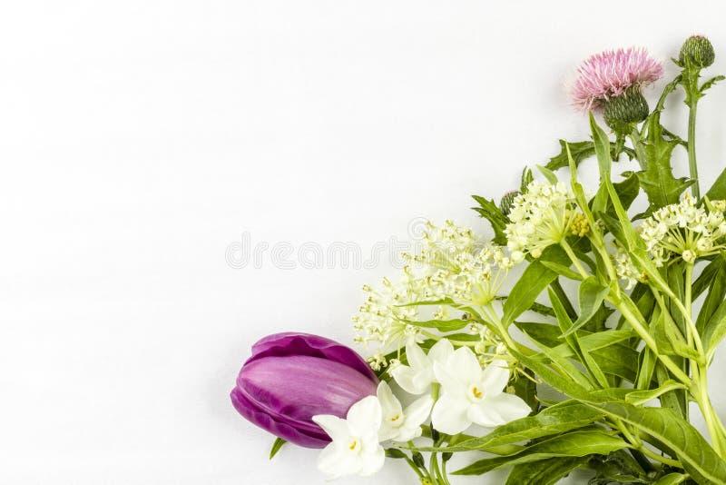 Tulpennarcissen en wilde bloemen in een hoek stock fotografie
