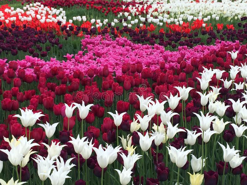 Tulpenrivier royalty-vrije stock foto
