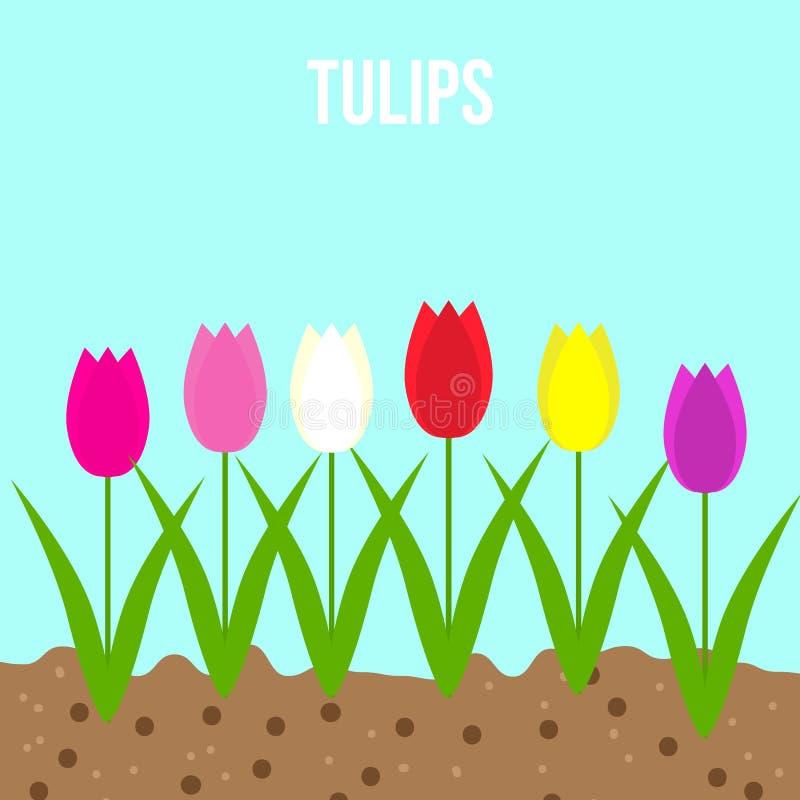 Tulpensatz Frühlingsgartenblumen vektor abbildung