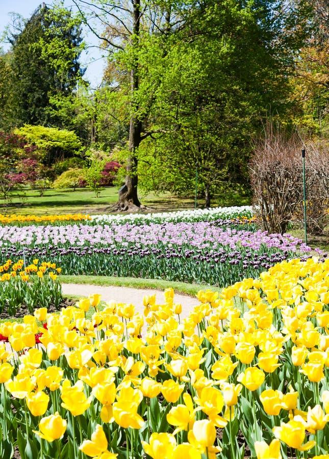 Tulpentuin stock afbeelding