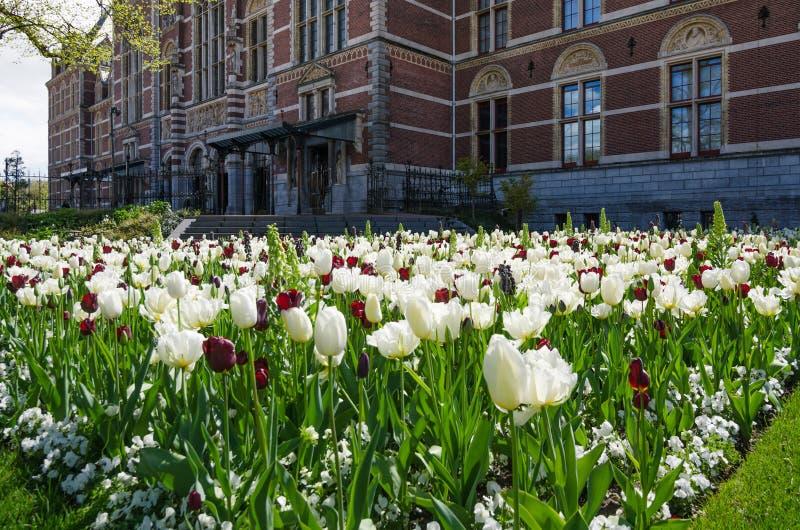 Tulpentuin rond Rijksmuseum stock foto's