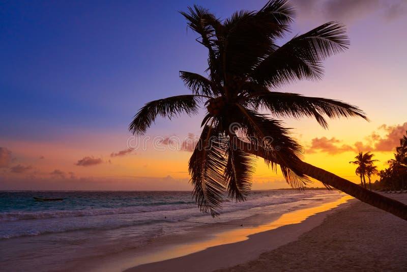 Tulum海滩日落棕榈树里维埃拉玛雅人 库存照片