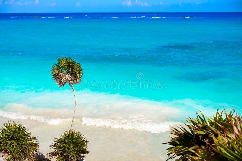 Tulum绿松石海滩在里维埃拉玛雅人的棕榈树在玛雅 免版税库存照片