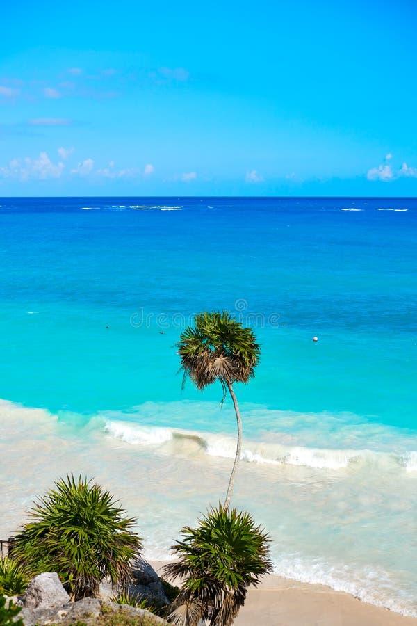 Tulum绿松石海滩在里维埃拉玛雅人的棕榈树在玛雅 免版税库存图片
