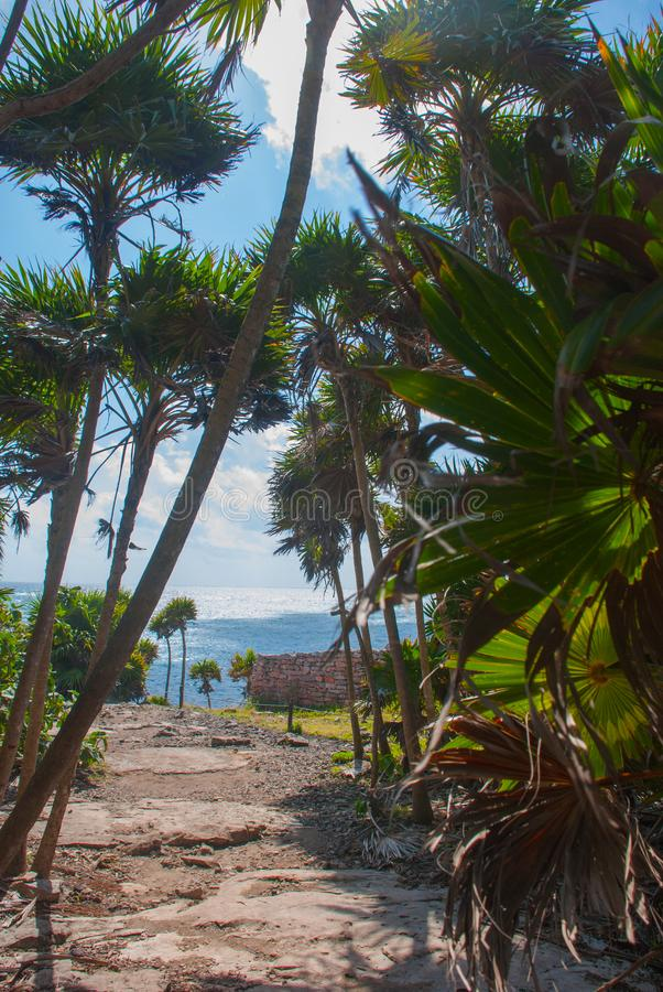 Tulum, Μεξικό, Yucatan: Όμορφο τοπίο με τους φοίνικες και την καραϊβική θάλασσα στοκ φωτογραφία με δικαίωμα ελεύθερης χρήσης