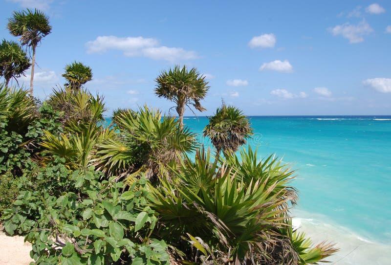 Tulum beach, Carribean sea royalty free stock photo