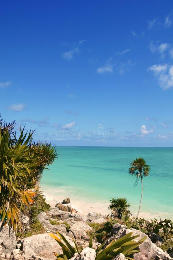 Download Tulum Mayan Riviera Tropical Beach Palm Trees Stock Image - Image of idyllic, seascape: 14270043