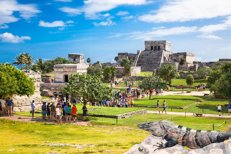 Iguana on the ruins of Tulum in Mexico. royalty free stock photography