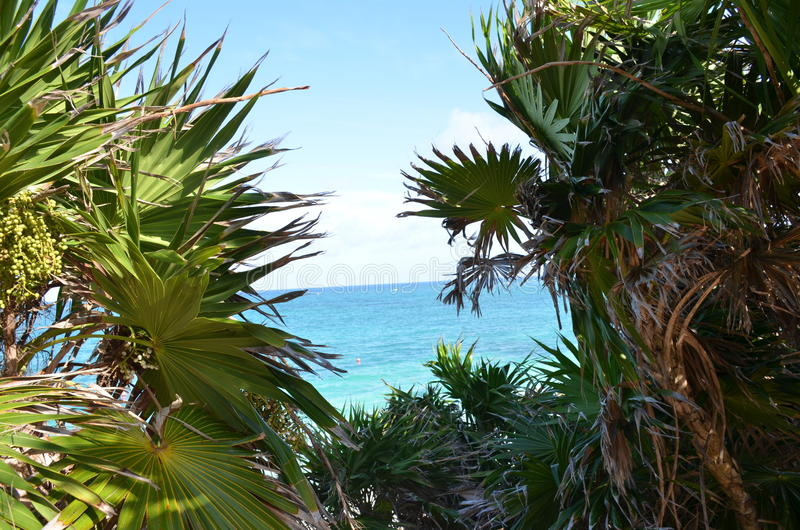 Tulum Palm trees and ocean. Picture taken in the Paradise Beach of Tulum, Quintana Roo, Mexico, where you can see the palm trees framing the beautiful turquoise royalty free stock photography