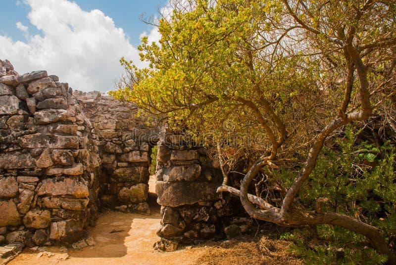 Tulum, Riviera majowie, Jukatan, Meksyk: Wejście świątynia Ruiny zniszczony antyczny Majski miasto obraz royalty free