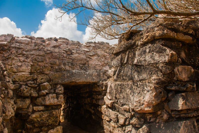 Tulum, Yucatan, Mexique : L'entrée au temple Ruines archéologiques, construites par les Maya image libre de droits