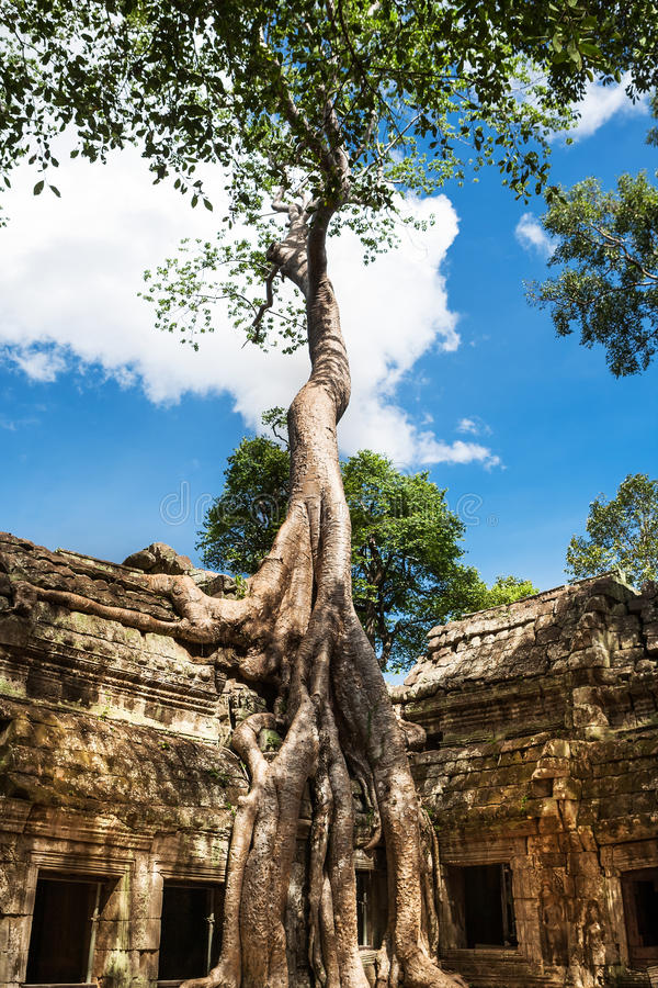 Tum Phrom a Angkor Wat, Cambogia fotografia stock libera da diritti