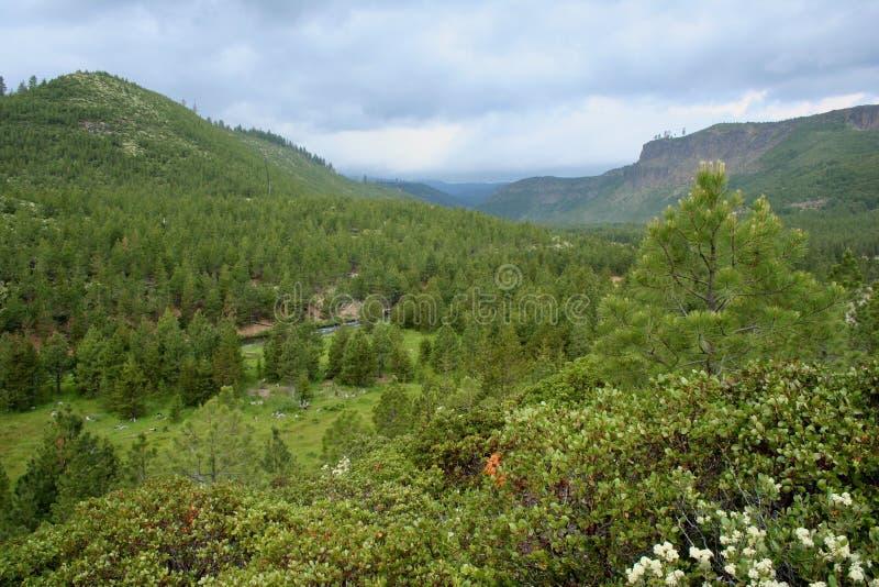 Tumalo Creek Canyon royalty free stock photo