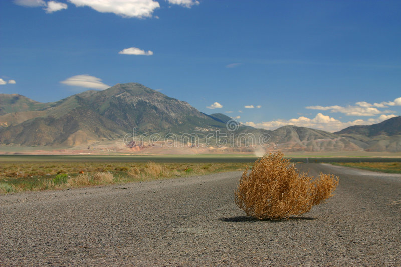 Tumbleweed stockfotografie