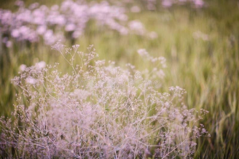 Tumbleweed stock photography